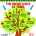 The Benefit of Planting Trees- Importance of Trees in Our Life