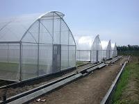 Dahsyatnya Keunggulan yang Dimiliki Plastik UV Untuk Greenhouse