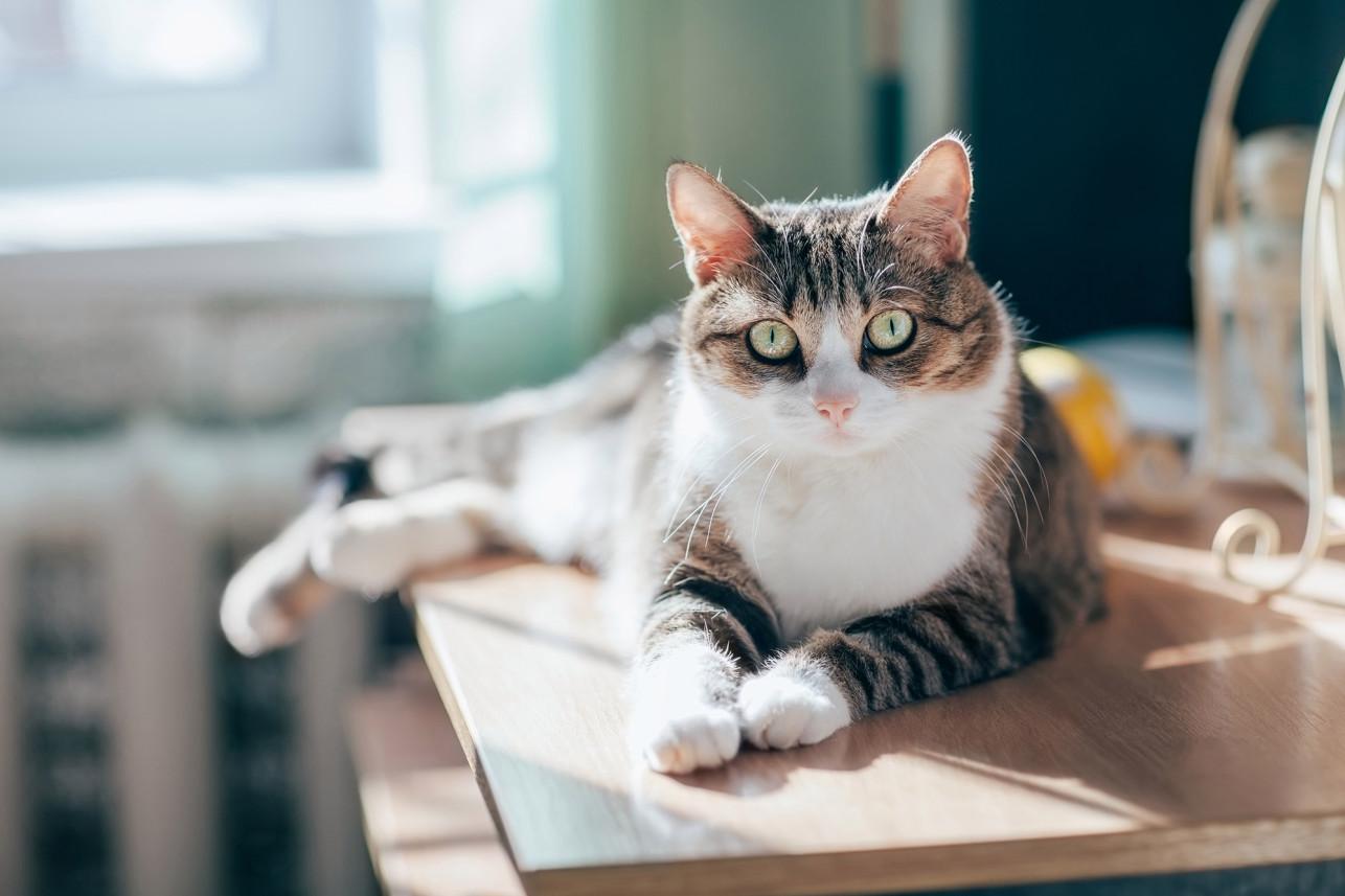 First Cat Positive of Coronavirus