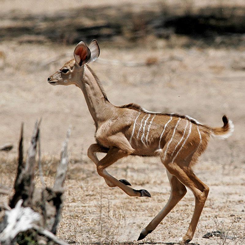 Baby Wild Animals Running