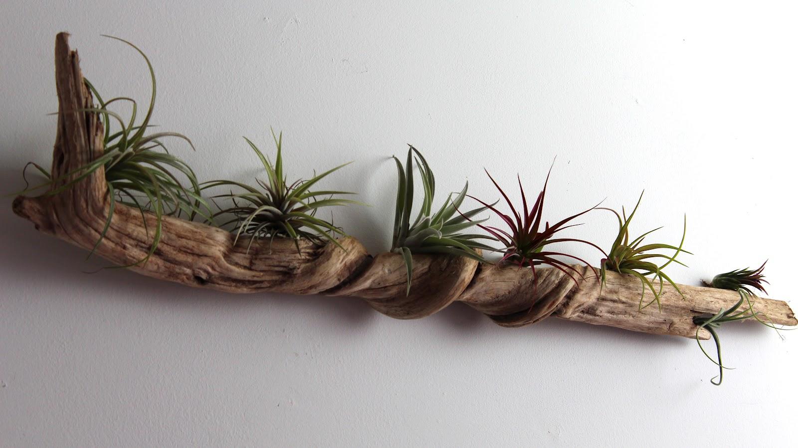 Nest: DIY Driftwood Wall Garden