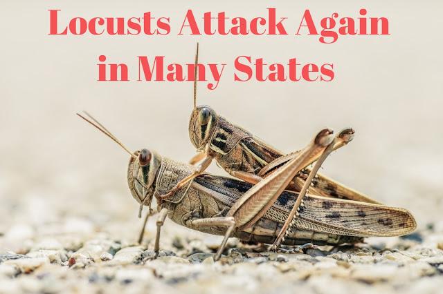 Locusts Attack