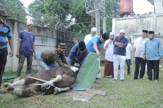 Bank Jambi Laksanakan Lebaran Idul Adha Dengan Memotong Kambing 7 Ekor Dan Sapi 30 ekor.