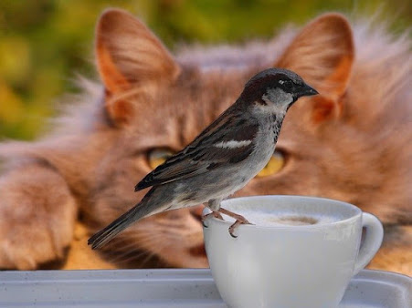 Cat watching bird perched on a teacup
