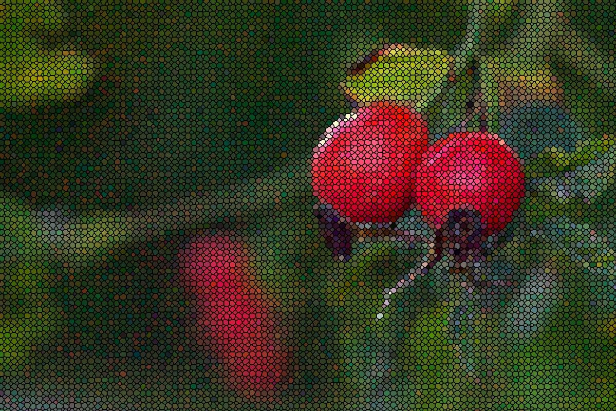#190 Neonon f2.8 50mm - Digitale Hagebutten