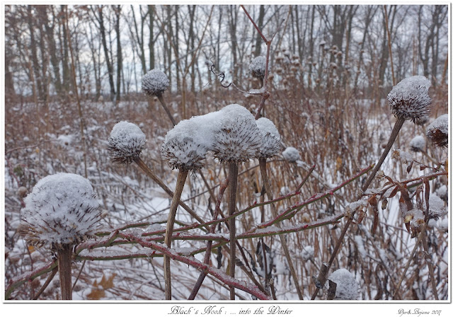 Black's Nook: ...into the Winter