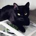 Jak uprawiać rośliny w mieszkaniu mając koty? - czyli Fresh & Green cz. II