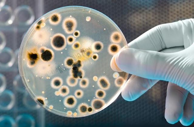 Pengertian Mikrobiologi, Sejarah, Faktor, Jenis  dan Mekanismenya