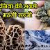 भारत में 30 हजार रुपये किलो बिक रही है प्रधानमंत्री मोदी की ये पसंदीदा सब्जी, जानिए खासियत