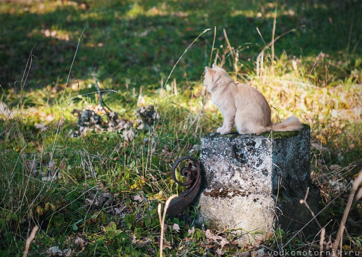 Памятник прусскому коту