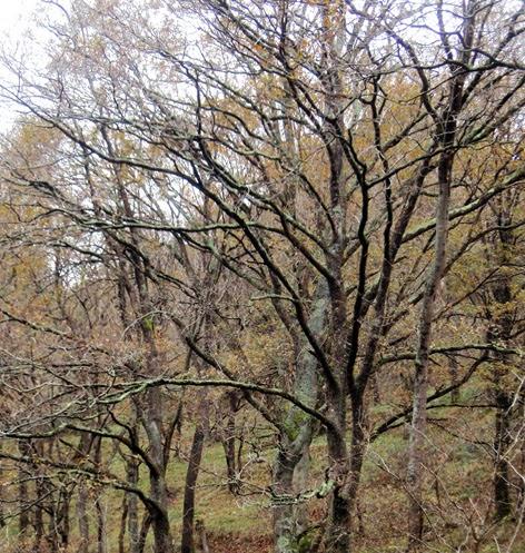 árboles de hoja caduca en invierno
