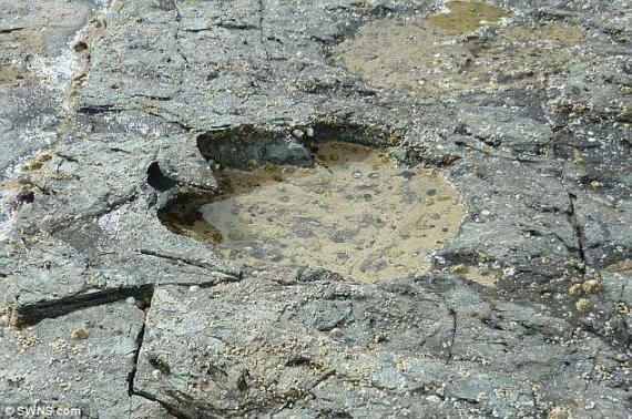 Археологи знайшли сліди найбільших у світі динозаврів