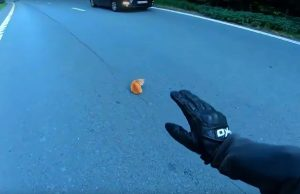 Motorcyclist acts quickly and save tiny kitten found in the middle of the road