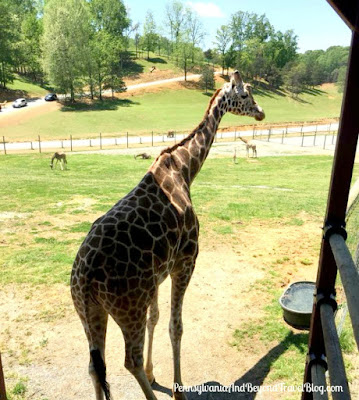 Virginia Safari Park & Zoo in Natural Bridge, Virginia