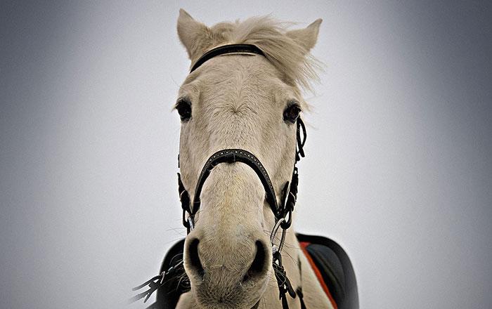 Kuda memiliki Ingatan kuat