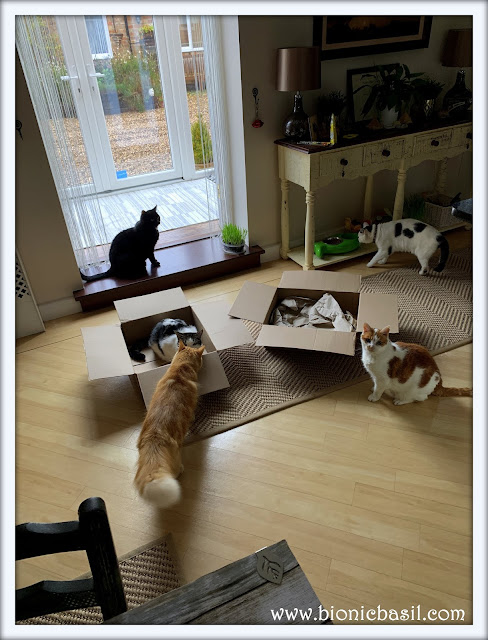 Five Cats And Two Boxes ©BionicBasil® The Sunday Selfies
