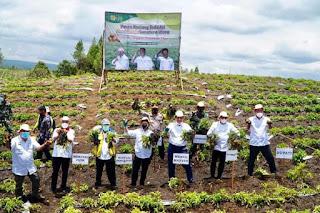 Tiga Menteri Panen Kentang di Food Estate Humbahas dan Kick off Lokasi 785 Ha