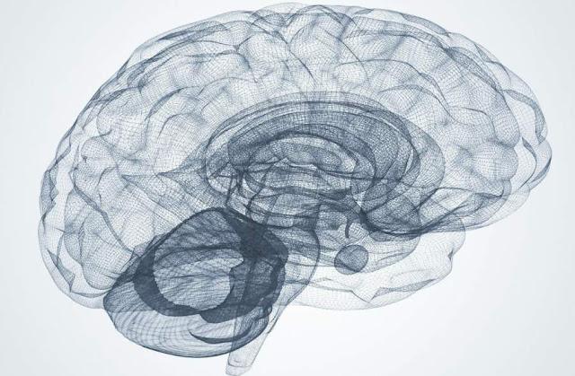 human brain functions