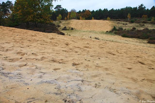 Les dunes de sable des Béorlots, Forêt de Fontainebleau