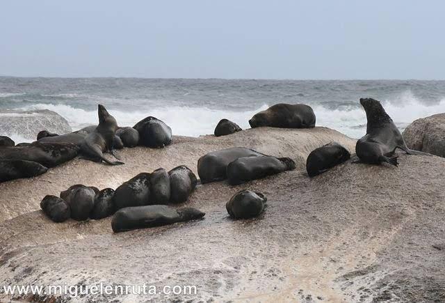 Leones-marinos-Península-del-Cabo
