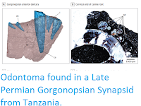 https://sciencythoughts.blogspot.com/2017/02/odontoma-found-in-late-permian.html