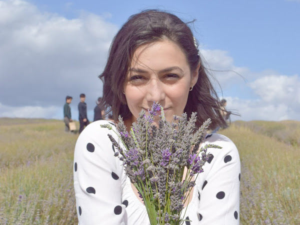 Lavender Picking at Hitchin Lavender