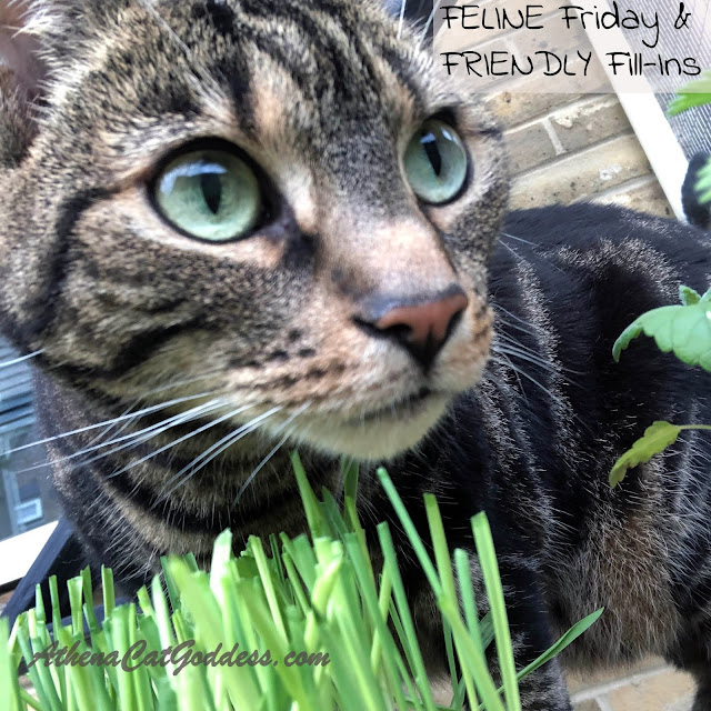 tabby cat with cat grass