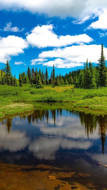 Grass, Landscape, Lake, Meadow, Trees