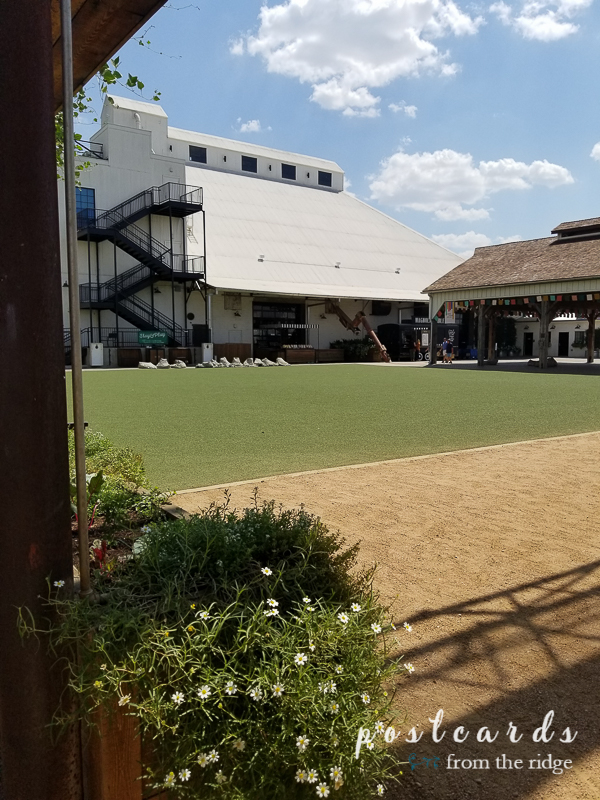 large grassy lawn at magnolia market