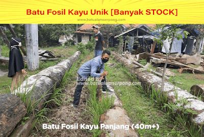 tambang batu fosil kayu di bogor