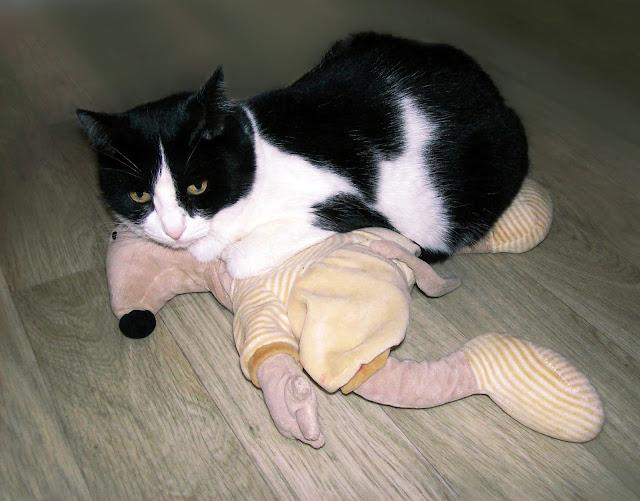 Фортуна поймала мышь и теперь думает, что же с ней делать?