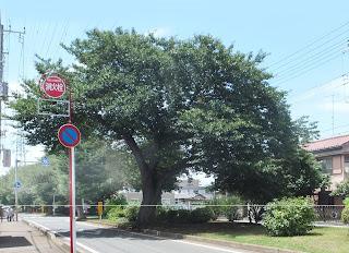 街路樹の写真