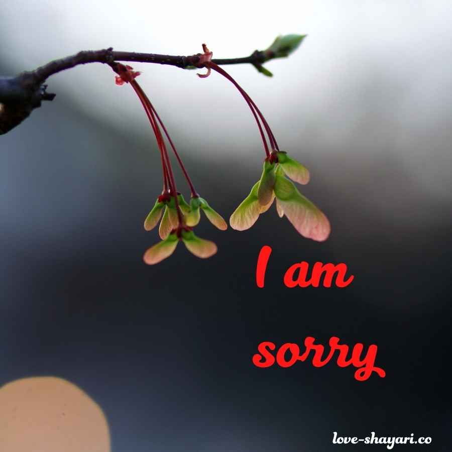 sorry images for bf