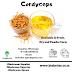 What Is Cordyceps Mushroom
