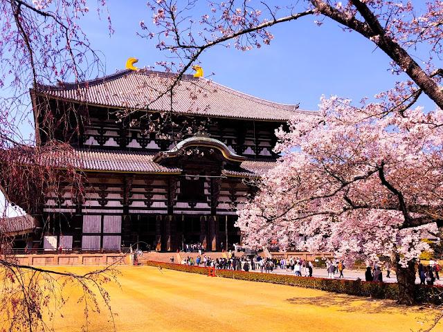 Nara park, Geyik, japonya, kyoto, sushi, gezilecek yerler, tapınak, sakura, geyik beslemek, pembe beyaz, gezi, yurtdışı, asya, Kore, kimono, nasıl gidilir, ne yenir, nerede, japonya ulaşım, kyoto , temple, kobe, beef, todaiji, nara ceylan parkı, uzakdoğu,