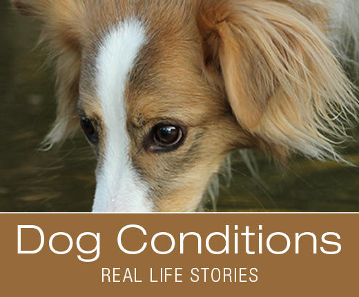 Dog Conditions - Do Dogs Get Hemorrhoids? Pray for Stormy