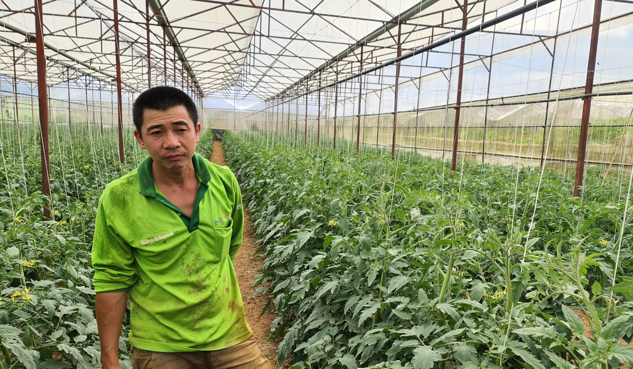 Anh Diệp Phú Cường bên vườn cà chua đang hồi hộp chờ sau ngày 15.9 nông sản sẽ trôi chảy. Ảnh: Lâm Viên