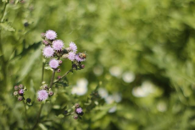 Round Bokeh Flower Buds