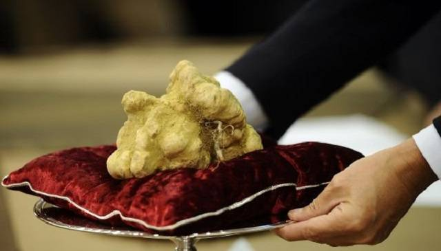 The World's Most Expensive Food Is a Fungus That Costs $3,600 a Pound