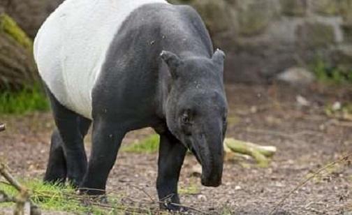 Human footprint driving mammal extinction crisis