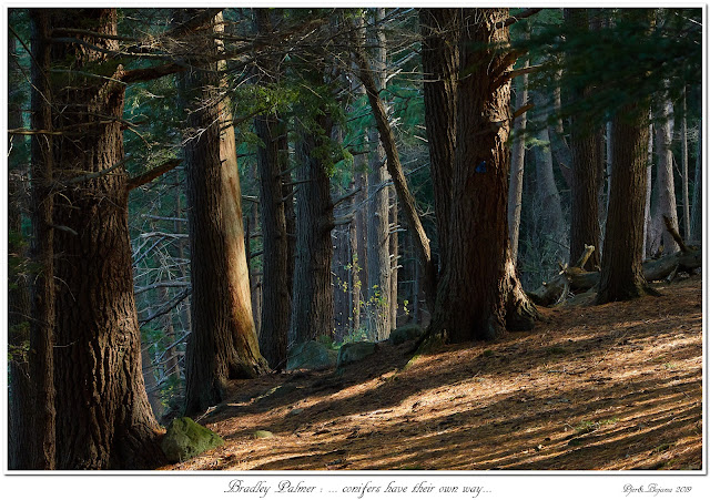 Bradley Palmer: ... conifers have their own way...