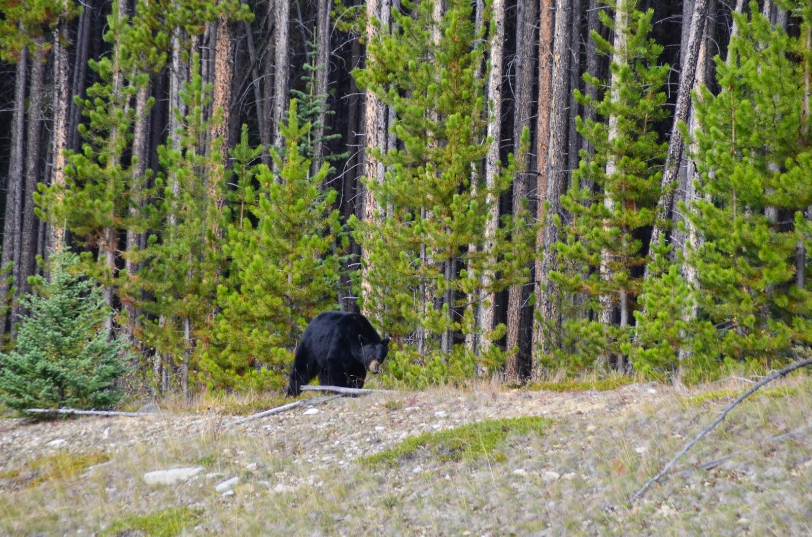 Parque Nacional de Banff, Canadá