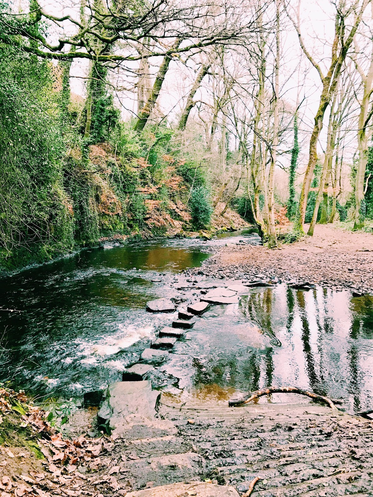 Rivelin Woods, Sheffield