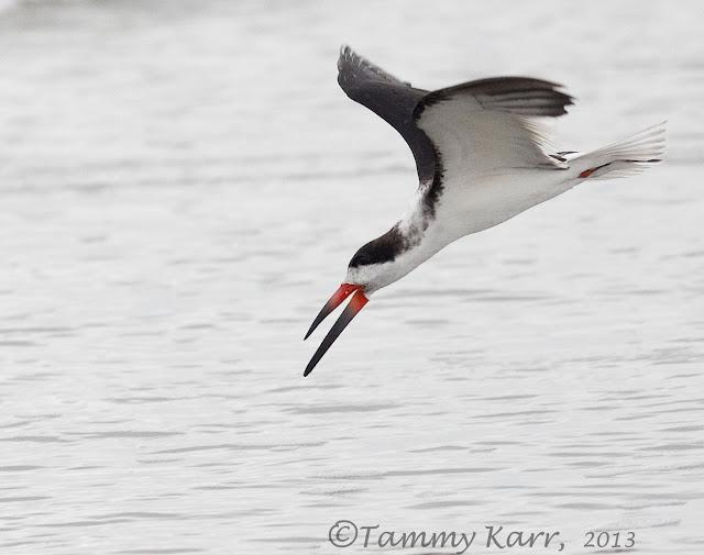 i heart florida birds: January 2013