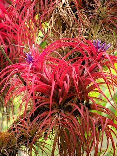 Bromeliads on Tree Branches