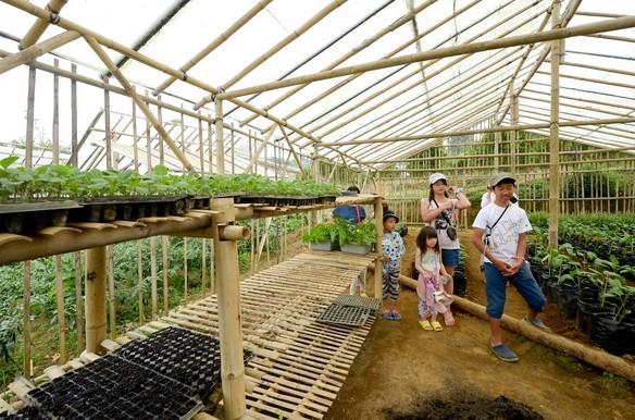 Destinasti Objek Wisata Agro Pelaga Di Petang Badung Bali