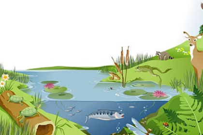Pengertian Ekosistem Alami Dan Buatan Beserta Contohnya