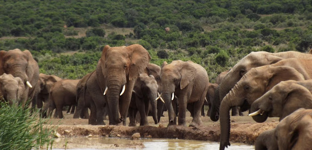 To trade or not to trade? Breaking the ivory deadlock