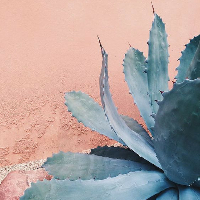 botanical inspiration photos - cactus • the Round Button blog