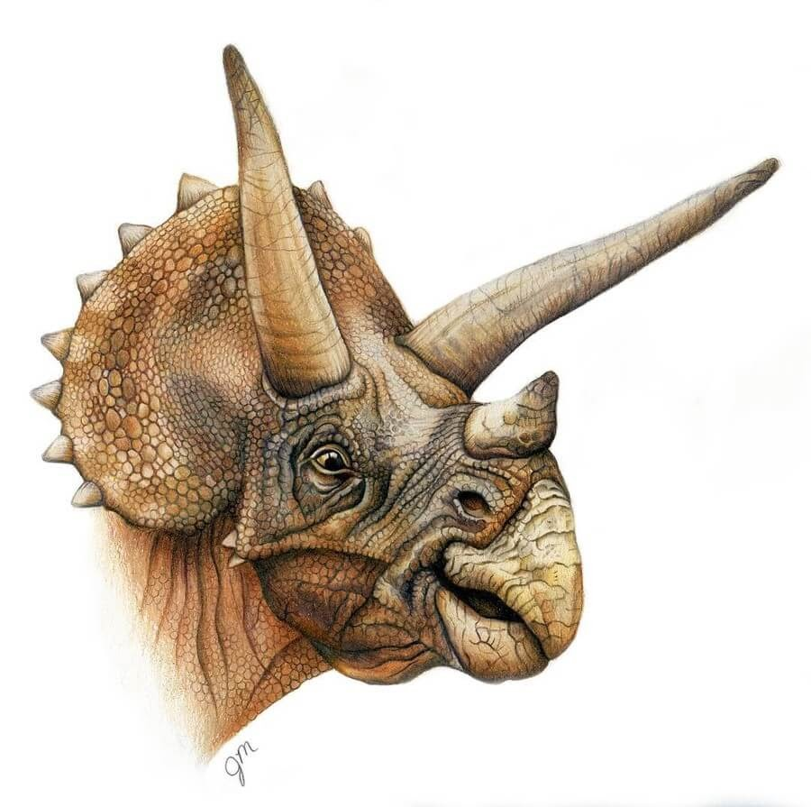 13-Triceratops-Julianna-www-designstack-co